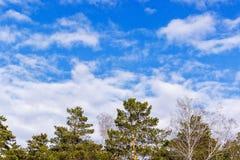 Träd mot den blåa himlen och molnen arkivfoton