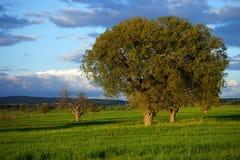 Träd mot en härlig himmel Royaltyfria Bilder