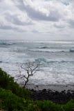 Träd mot vågor Royaltyfria Foton