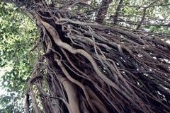 Träd mycket av liv - Mumbai, Indien Royaltyfri Fotografi