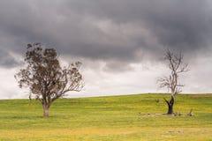 Träd nära Bothwell på en stormig eftermiddag Arkivfoton