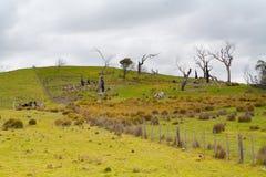 Träd nära Bothwell på en stormig eftermiddag Arkivfoto