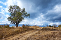 Träd nära byvägen Arkivfoto