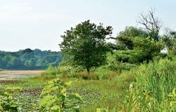 Träd nära dammet Arkivbild