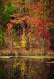 Träd nära dammet i höst Arkivbild