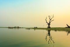 Träd nära floden i solnedgångtid Royaltyfri Fotografi