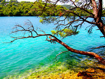 Träd nära havet Arkivbilder