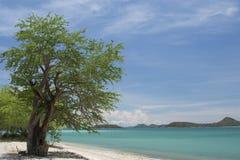 Träd nära stranden Arkivfoto