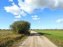 Träd nära vägen och gröna fält, Litauen arkivfoto