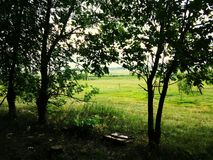 Träd Natur Gräsplan _ Trädgårds- skönhet av naturen Royaltyfri Bild