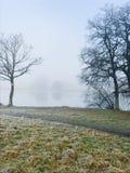 Träd och äng på den dimmiga sjön Fotografering för Bildbyråer