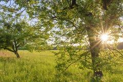 Träd och äng på solnedgången Royaltyfria Bilder