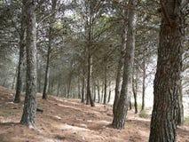 Träd och by Royaltyfria Bilder