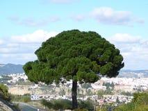 Träd och by Fotografering för Bildbyråer