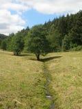 Träd och bäck Royaltyfri Fotografi
