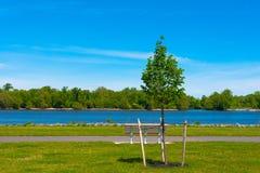 Träd och bänk vid en flod Royaltyfria Foton