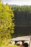 Träd och badplattform på sjön Arkivbild
