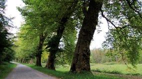 Träd och bana under sommar och höst royaltyfria foton