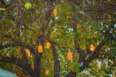 Träd och belysning royaltyfria bilder