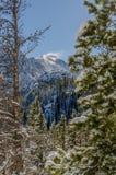 Träd och berg för snö dolda högt i Colorado berg Royaltyfri Foto