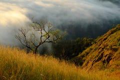 Träd och berg på molnet Fotografering för Bildbyråer