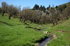 Träd och bergflod Arkivbild
