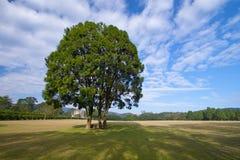 Träd och blå himmel Arkivfoto