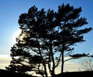 Träd och blå himmel med solen nära långt royaltyfria foton
