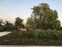 Träd och blommasäng arkivfoton