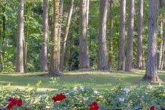 Träd och blommor i grön solig stad parkerar Royaltyfri Foto
