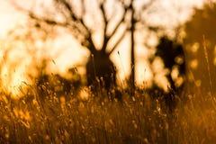 Träd och blommor i tillbaka ljus Fotografering för Bildbyråer