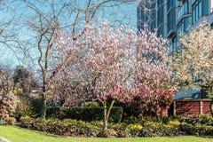 Träd och blommor i vår på Vancouver, F. KR., Kanada Arkivbild
