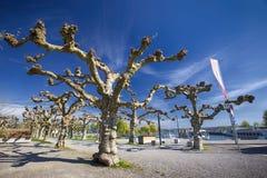 Träd och blommor längs embarkmenten i det Kreuzlingen centret nära den Konstanz staden med sjön Constance och fartyg i Royaltyfri Bild