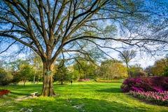 Träd och blommor på Sherwood Gardens Park, i Baltimore, Maryla Arkivfoton