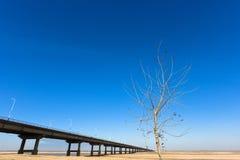 träd och bro med blå himmel Arkivfoto
