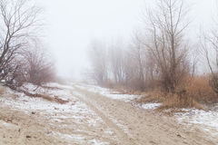 Träd och buskar i dimman på en vinter sätter på land Fotografering för Bildbyråer
