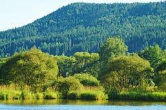 Träd och buskar ovanför vattnet Royaltyfria Bilder