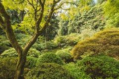 Träd och buskar på en japanträdgård Royaltyfria Foton