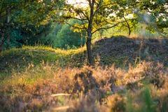 Träd och buskar som ses mot solljus på en Heath Landscape royaltyfri bild