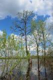 Träd och buskar som står i vattnet av floden under det höga vattnet för vår, under en blå himmel med moln Royaltyfria Bilder