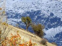 Träd och buske i snö fotografering för bildbyråer