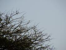 Träd och den blåa himlen arkivbilder
