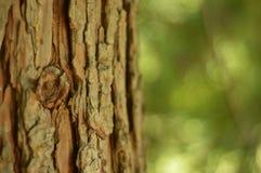 Träd och dess skäll Royaltyfria Foton