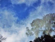 Träd och dimma Arkivfoto