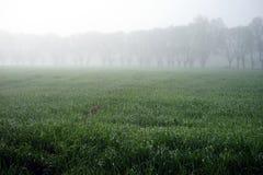 Träd och dimma Fotografering för Bildbyråer