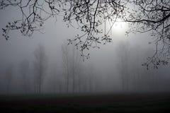 Träd och dimma Royaltyfri Fotografi