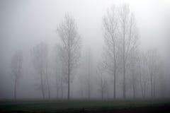 Träd och dimma Royaltyfri Bild