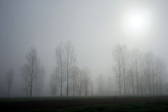 Träd och dimma Arkivbild