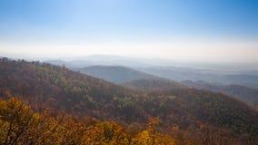 Träd och dimma i bergen Royaltyfri Bild