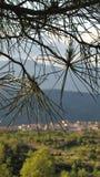Träd och en avlägsen by Arkivfoton